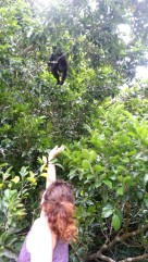 We saw a family of howler monkeys eating lunch