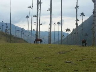 Basically everyone at the hostel wanted to see Valle de Cocora near our hostel in Salento. We scored a great deal.