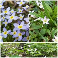 Spring has sprung!!!