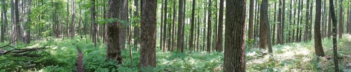 Zee woods